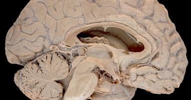 Arbor Vitae: The Neuroanatomist's Perspective